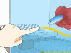 How to Grow a Bond With Your Betta Fish: 11 Steps (with Pictures) Baby Betta Fish, Pet Fish, Colorful Fish, Tropical Fish, Beta Fish Care, Fish Tank Themes, Betta Aquarium, Betta Fish Tank, Siamese Fighting Fish