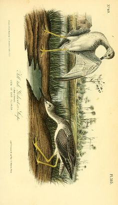 v 5 - The birds of America : - Biodiversity Heritage Library