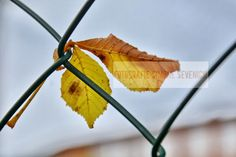 ...festgehalten... der Wind schafft kleine Kunstwerke MONE`S FOTOBLOG: Suche nach dem Herbst...