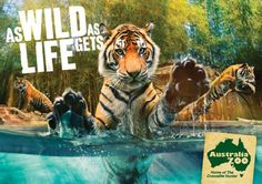 As Wild as Life gets! By Australia Zoo