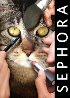 Tabs the Cat for Makeup and Beauty Blog