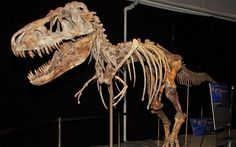 The US government is suing to force an auction house to return the fossil of a dinosaur that roamed Mongolia 70 million years ago to the Asi...