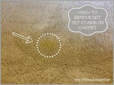 How To Get Rid Of Pet Stains On Carpet via Little Brags