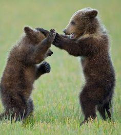 ** Bears