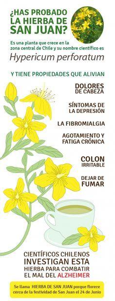 Las propiedades de la Hierba de San Juan o Hipérico. #hiperico #remedios #hierbas