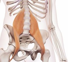 Экология жизни\. Здоровье: Какая самая главная мышца тела? Многие назовут язык, но сегодня мы поговорим про мышцу, в которой находится душа человека, по крайней мере так считали древние даосы. Мало кто знает про эту мышцу, а между тем она является ключом к красивой осанке и укреплению мышц кора. Это поясничная мышца ( psoas).