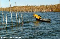 Pescador equipado para el frío  y la humedad de la Albufera