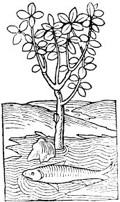 """Résultat de recherche d'images pour """"medieval forest drawing"""""""