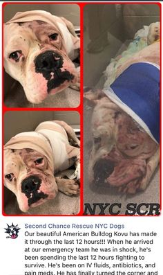 3/2/17 PRAYERS NEEDED FOR KOVY! PLEASE CONSIDER DONATING FOR HIS SURGERY! HE'S BEEN SHOT! /ij https://m.facebook.com/story.php?story_fbid=1172996252809428&substory_index=0&id=268612969914432&__tn__=%2As