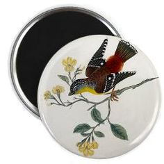 Magnet - Vintage Birds  Gorgeous, colorful vintage illustration of a bird sitting in a tree decorates this magnet.