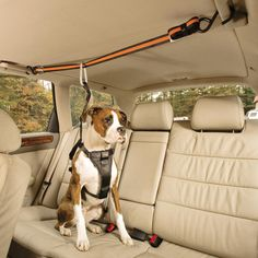 DOGS LOVE RIDING IN TRUCKS AND CARS! - THE WHOLE BACK SEAT!