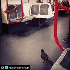Deixa eu ir de trem porque voando não tá dando. - A Pomba # #Repost @usuariosmetrosp (@get_repost)    Pruuu transporte público para todos    Talita @talitazimermann  #usuariosmetrosp #metrosp #saopaulo #sampa #cptm