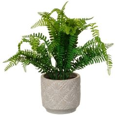 Add some colour to your home with this fabulous Artificial Fern Plant. A stylish addition to your home decor, or a special gift for a new home - B&M. Decorative Accessories, Ceramics, Real Plants, Pot, Cheap Artificial Flowers, Decorative Aggregates, Potted Plants, Ceramic Pot, Cheap Vases