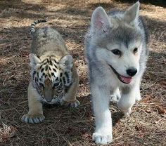 my two favorite animals! <3