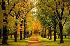 Podzim v Třebíči Vineyard, My Photos, Country Roads, Outdoor, Pictures, Outdoors, Vineyard Vines, Outdoor Games, Outdoor Living