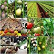 Check out this list Dwarf from Agri Farming Agriculture Farming, Dwarf, Livestock, Tips, Check, Counseling