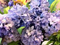 The Enchanted Petal: hyacinth