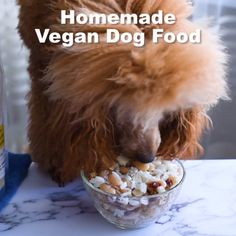 Try our homemade vegan dog food recipes to master your pup's nutritional health. DIY homemade vegan dog food recipe with video and step by step photos. Make Dog Food, Diy Food, Food Ideas, Vegan Dog Food, Healthy Beans, Frozen Dog Treats, Salud Natural, Homemade Dog Treats, Dog Training Tips
