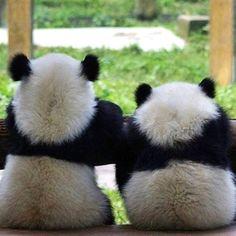 Thank you for your image: @pandabuzzlife #pandalove #pandabear #panda #pandaswag #pandas #pandalife #pandastyle #pandafunny #pandan #pandathing #pandatao #pandasofinstagram #pandaface #pandaexpress #pandagram #pandaremix #TheAngelPanda