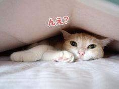 うにとソファー|うにオフィシャルブログ「うにの秘密基地」Powered by Ameba