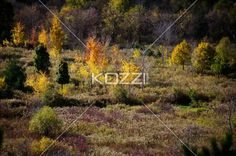 forest with autumn trees. - Image of forest with autumn trees.