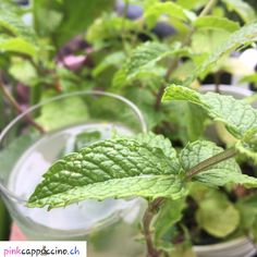 Mojito (sans alcool) Agaves, Mojito, Plant Leaves, Desserts, Plants, Mint Bouquet, Alcohol, Meal, Tailgate Desserts