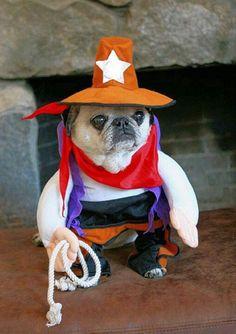 Pug and sheriff costume / wild wild west