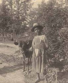 African American girl with a calf. :: Alabama Photographs and Pictures Collection