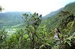 Oahu Mountain Rainforest Small Group Adventure