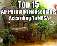 Air purifying houseplants according to NASA