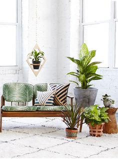 indoor plants..