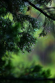 #Rainy day in the #forest.