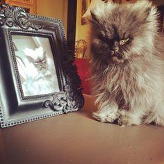Colonel Meow RIP