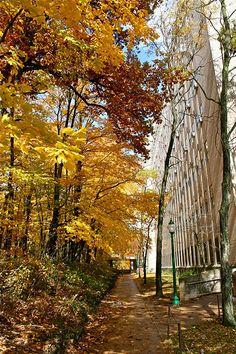 "Indiana University provides inspiration for my novel ""Daffodil Sunrise. Indiana Girl, Bloomington Indiana, Great Lakes Region, Sea To Shining Sea, Ohio River, Indiana University, Covered Bridges, Lake Michigan, Hoosier Mama"