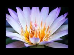 1 Hour Relaxing Music - Relaxing Music - White Lotus