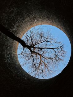 """About 'Trees in Silos' [a Flickr group]:  Just as cats love being in suitcases trees seem to take to old silos."" Click through to see an astonishing number of beautiful trees growing in old farm silos!""  Pictured: ""Inside the Silo"" by michales, via Flickr"