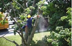 Tree care services and pricing factors Georgia Atlanta