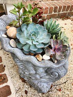 Succulents and Shells