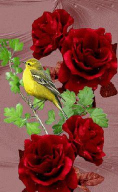 Pajaros en la rosa