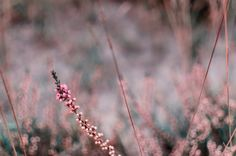 Heath grass on bokeh by Gerd Moors on 500px