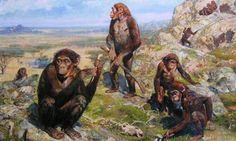 Australopithecus africanus, 2.6 million years ago. (Act 5)