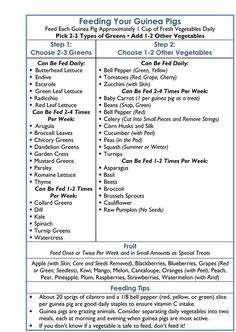 Easy to use guinea pig feeding chart from Wee Companions Small Animal Adoption, San Diego