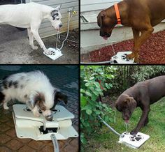 Innovative Dog Fountain safely attaches to a water hose or a faucet. Dog or cat has to step on the paw print to activate drinking fountain.