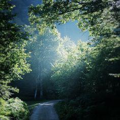 #Camino fresquito al #pozoDeLaArbencia #cantabria #spain #landscapes #nature #naturaleza #trees #arboles