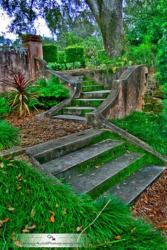 Mossy stairs by Chrissy Avila Photography