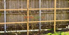Cum şi de ce se palisează murul | Paradis Verde Fruit Trees, Vines, Outdoor Structures, Gardening, Paradis, Agriculture, Green, Container Gardening, Plant