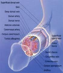 eliminado los valores de salmos de próstata