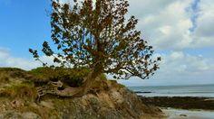 One amazing tree!!Taken near Westport in Ireland!!