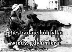 Pies zadaje ból tylko wtedy... #Bardot-Brigitte,  #Psy, #Śmierć