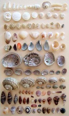 Petit Cabinet de Curiosites